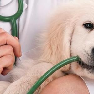 Contabilidade para clinica veterinaria