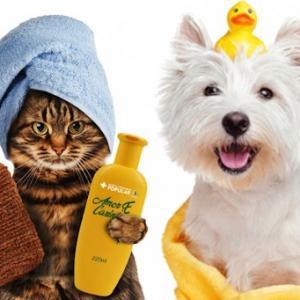 Contabilidade para pet shop